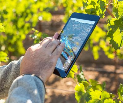 Das iPad und der Weinstock von morgen: ein Millesime wie früher, aber in der heutigen Zeit